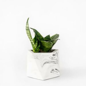 Houseraccoon Mare Medium White Marble Plant2