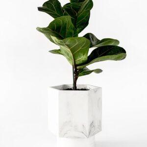 Houseraccoon Hapi White Marble Plant1