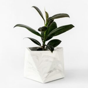 Houseraccoon Mare Large White Marble Plant1