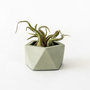 Houseraccoon Vand Small Olive Green Plant